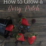 How to Grow a Berry Patch