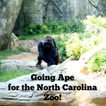 Going Ape for the North Carolina Zoo!